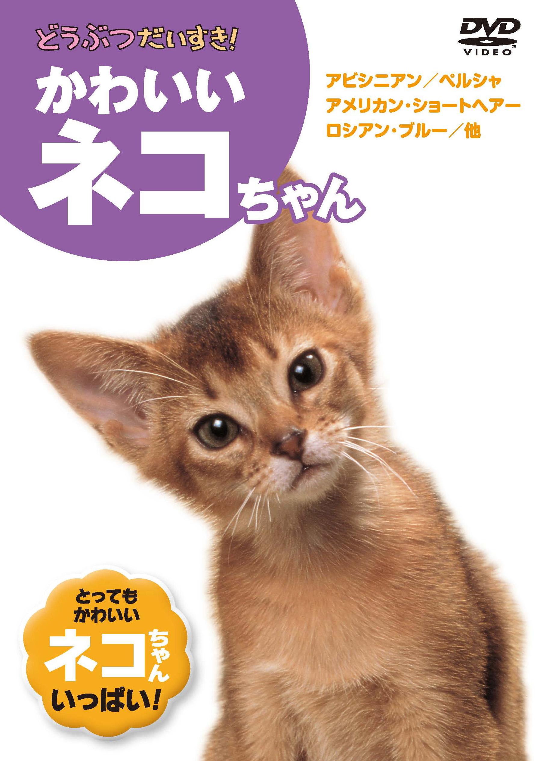 どうぶつだいすき3 かわいいネコちゃん